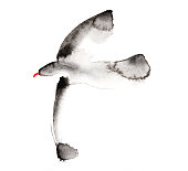 Watercolored Seagull on white background
