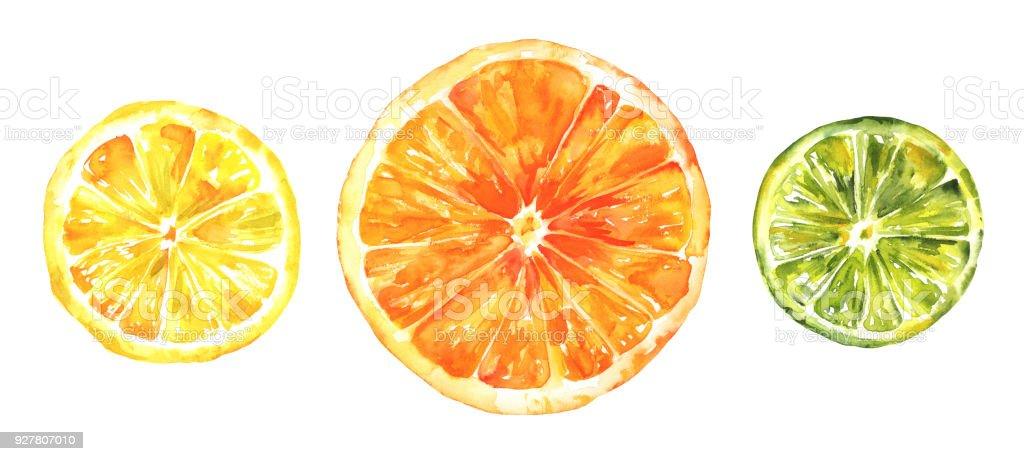Acuarela Cítricos Limón Naranja Y Limón Dibujo De La Mano Aislados ...
