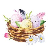 Watercolour Easter bird nest with eggs and flowers on white background. Watercolor festive illustration.