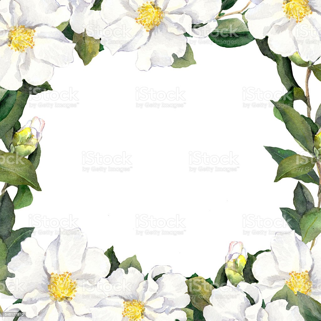 Watercolour floral frame with white flowers edging vector art illustration