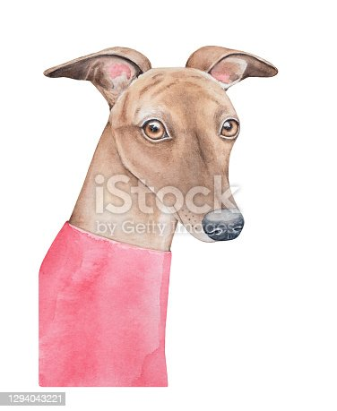 istock Watercolour illustration of beautiful stylish dog with funny ears wearing bright rose jumper. Hand drawn watercolor graphic paint on white background, isolated element for creative design decoration. 1294043221