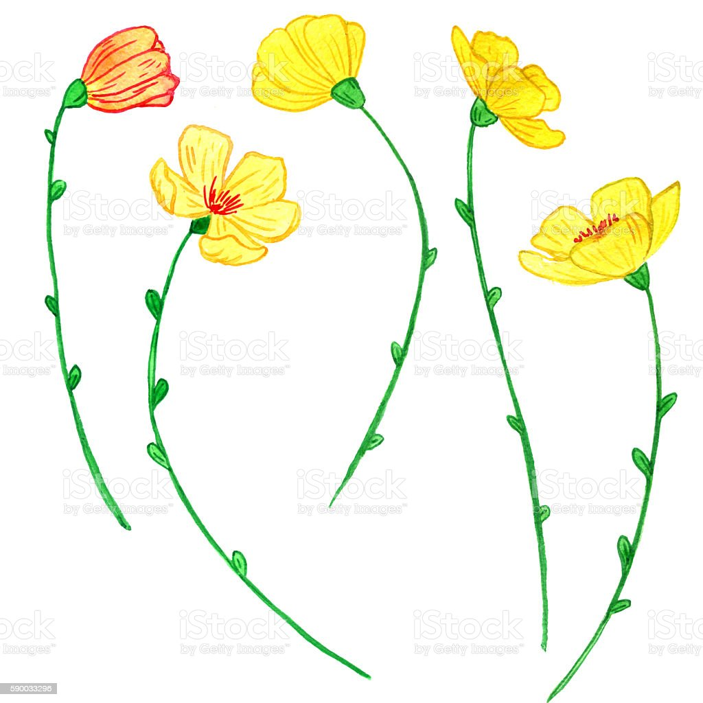 Watercoolor Drawing Yellow Flowers Stock Vector Art More Images Of