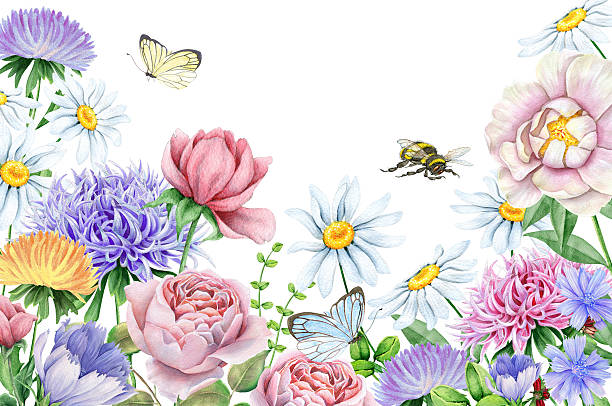 Watercoor floral image with beautiful flowers Hand drawn watercolor flowers isolated on white. A ready-made start for your greeting cards and other products. The author is Ekaterina Mikheeva, date of creation - March, 2016  bee borders stock illustrations