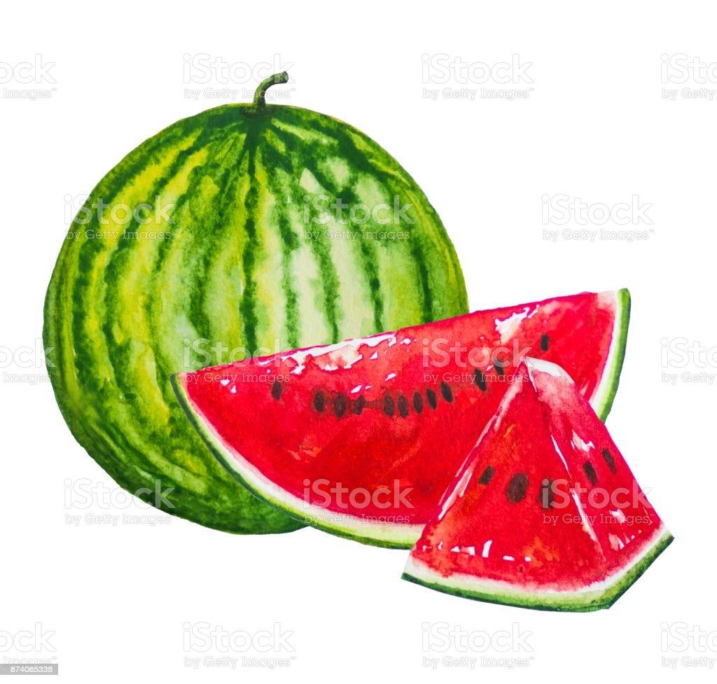Karpuz Meyve Boyama Suluboya Ile Boyalı Stok Vektör Sanatı