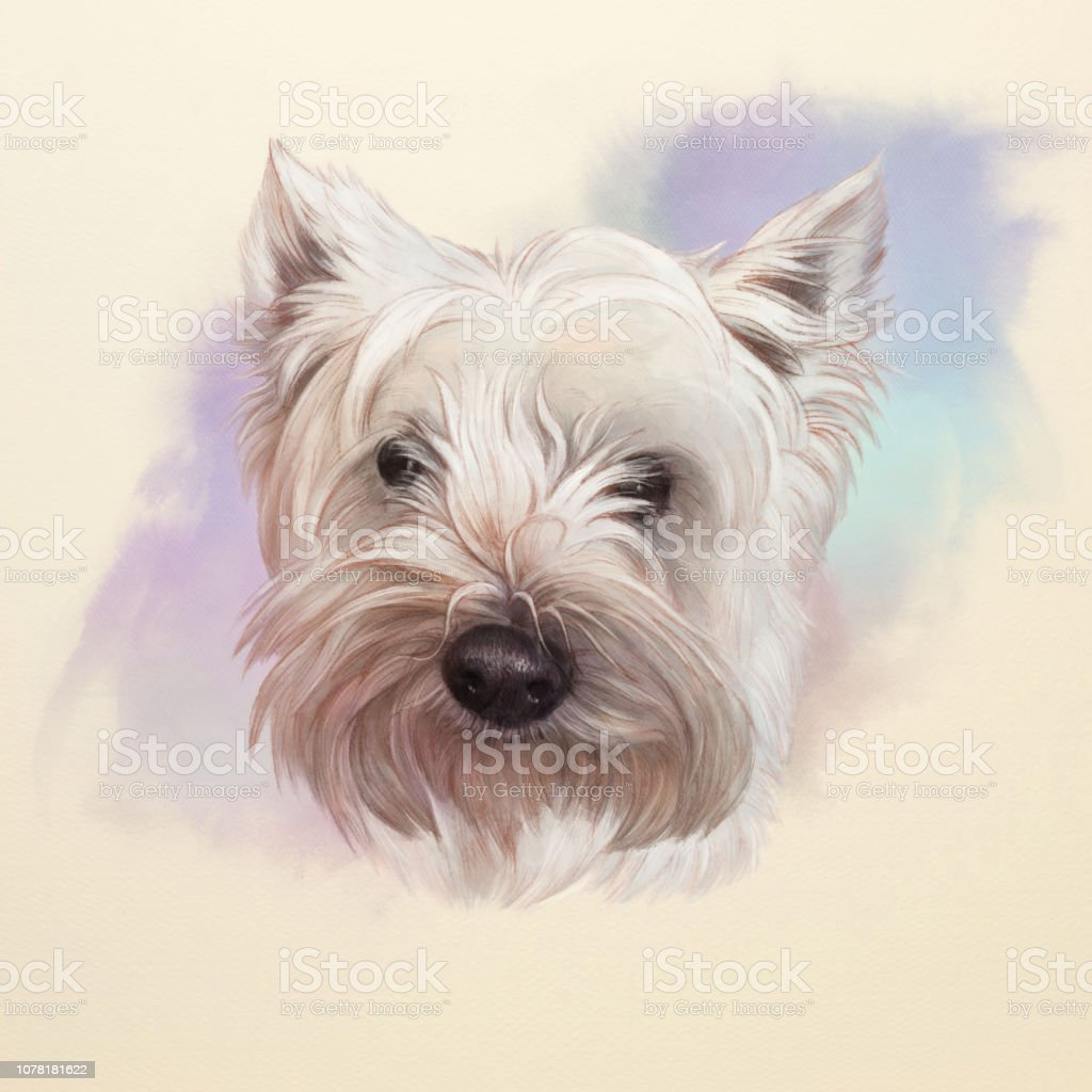 West Highland White Terrier Dog Stock Illustration Download Image Now Istock