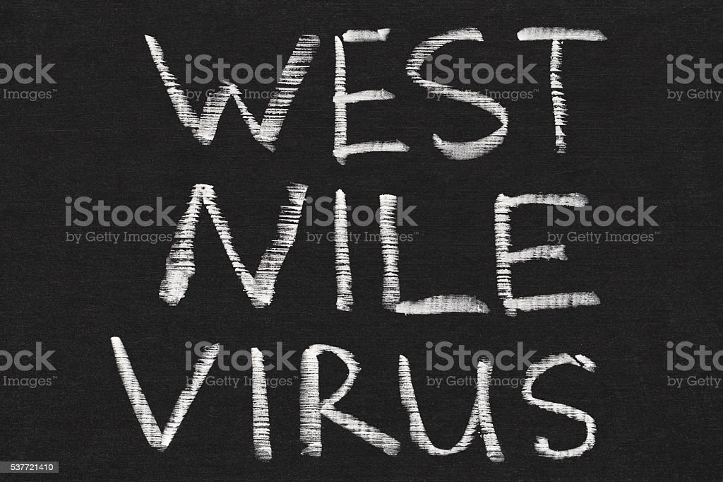 West Nile Virus Words On Chalkboard Background Royalty Free
