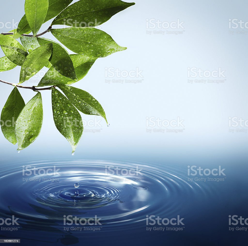 Wet leaves dripping into a puddle royalty-free stock vector art