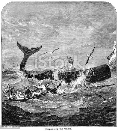 Whaling men harpooning a whale from rowing boats in a rough sea. Seagulls fly past in hopes of a quick meal and the whaling ship stands off to one side.