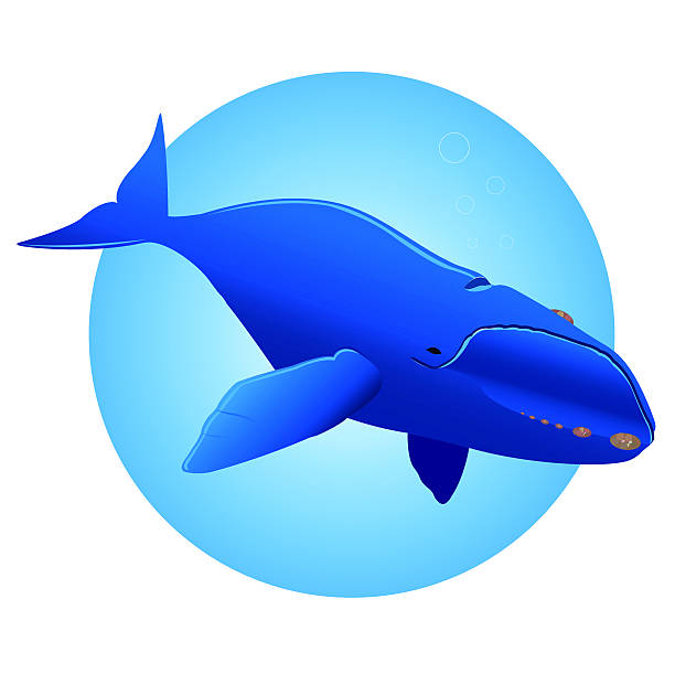 Whale vector art illustration