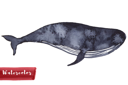 Whale in indigo color painting. Watercolor art drawing. Sea fish blue colour. Ocean animal. Isolated on white for fabric, textile, background, decoration kid illustration. silhouette element design