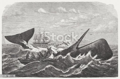 Whalers in action. Historical view from the 19th century. Wood engraving after a paintig (The Flurry, c. 1848) by William Charles Duke (Irish-Australian painter, 1814 - 1853) in Allport Library and Museum of Fine Arts (Hobart, Tosmania, Australia), published in 1869.