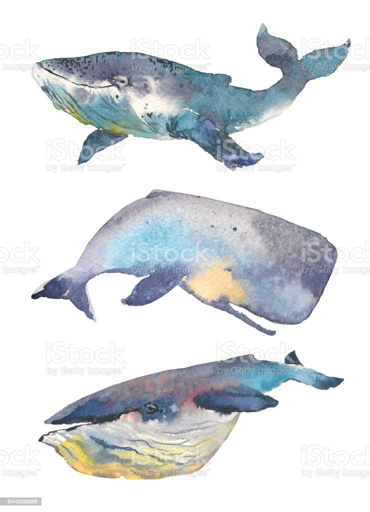 Balinalar Ayarlayin Deniz Hayvan El Boyamasi Illustrasyon Izole