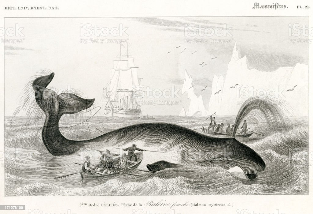 whaling, historic Illustration, 1849 royalty-free whaling historic illustration 1849 stock vector art & more images of 18th century