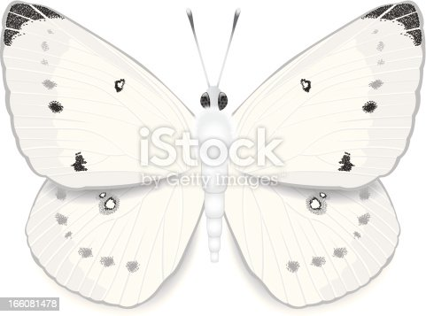 An illustration of a white cabbage butterfly.