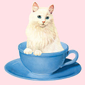 White Cat in a Coffee Cup