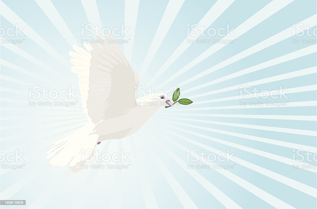 White dove with olive branch (vector) royalty-free white dove with olive branch stock vector art & more images of animal