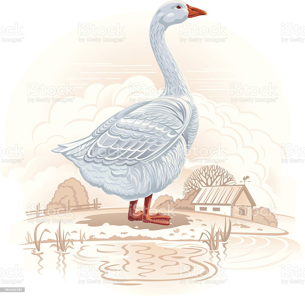 White goose royalty-free white goose stock vector art & more images of adult