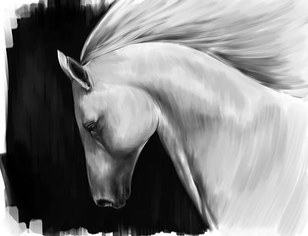 white horse vector art illustration