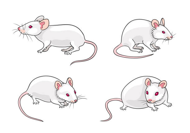 Royalty Free Lab Mouse Clip Art, Vector Images ...