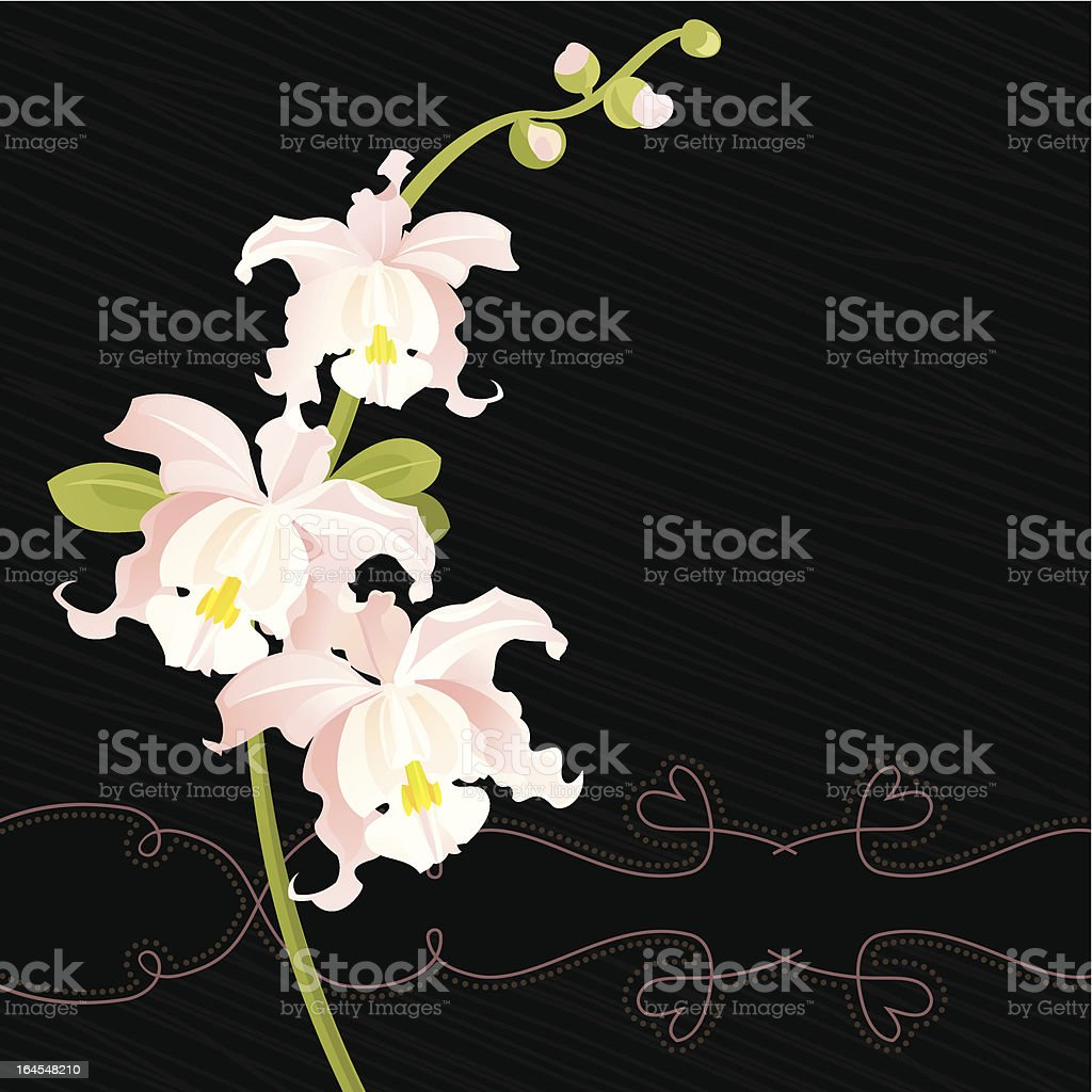 White Orchid (Black) vector art illustration