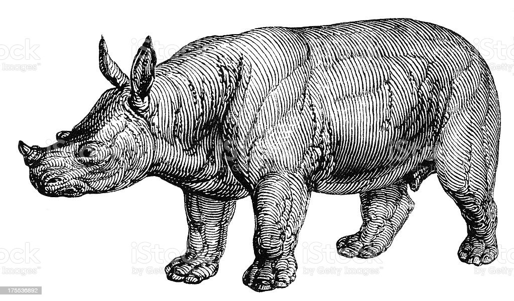White rhinoceros vector art illustration