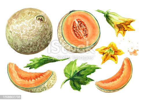 istock Whole, half and sliced cantaloupe melon with leaves and  flowers set. Watercolor hand drawn illustration, isolated on white background 1208802733