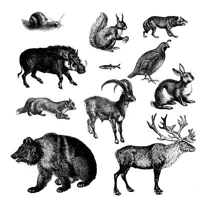 Wild Animals of Europe