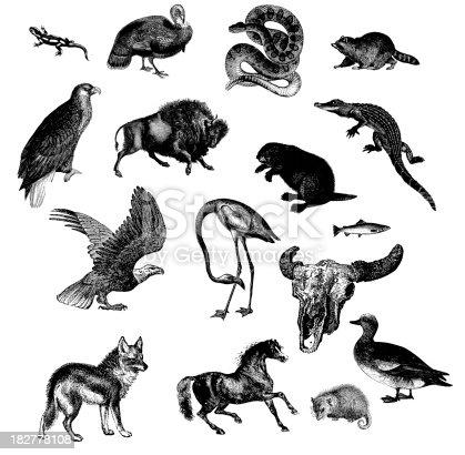istock Wild Animals of North America 182778108