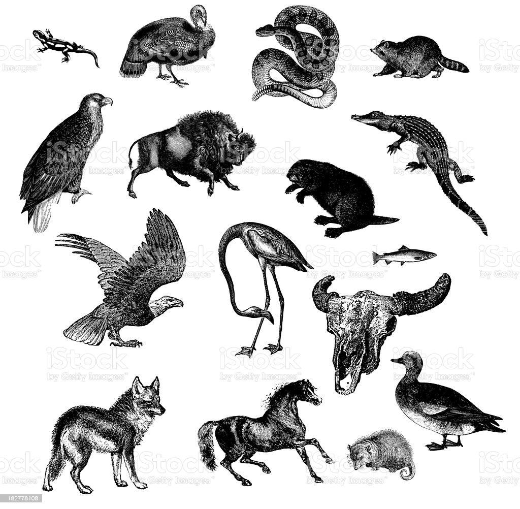 Wild Animals of North America vector art illustration