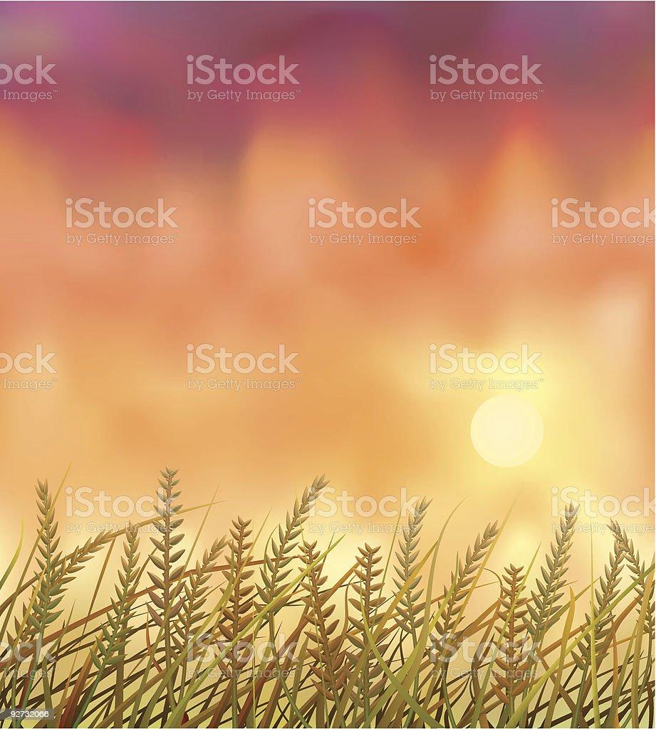 Wild crops field at sunset vector art illustration