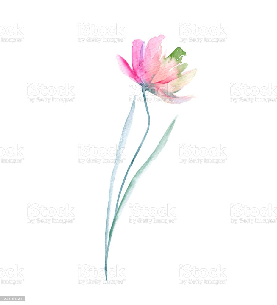 Wild flower. Isolated on white background. vector art illustration
