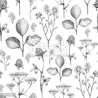 Wild flowers drawing. Seamless pattern