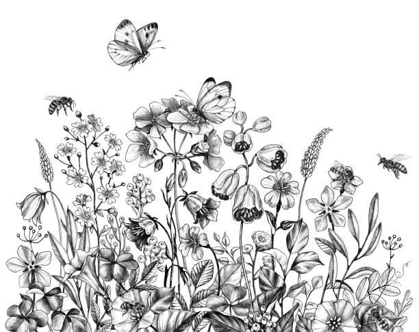 wild flowers, flying bees and butterflies Hand drawn wild flowers, flying bees and butterflies isolated on white background. Pencil drawing  elegance floral border in vintage style. bee borders stock illustrations