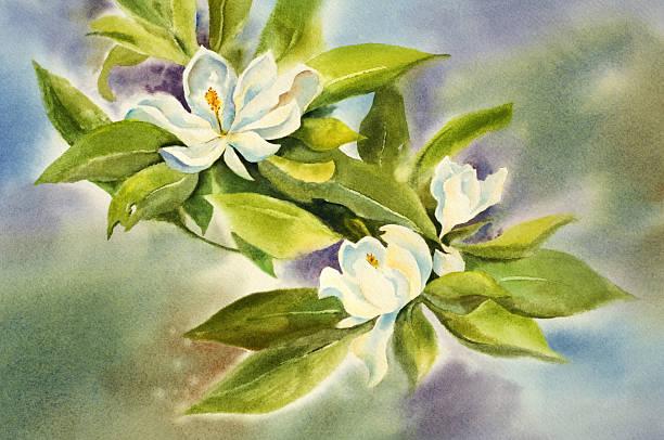 Wild Magnolia Blossoms vector art illustration