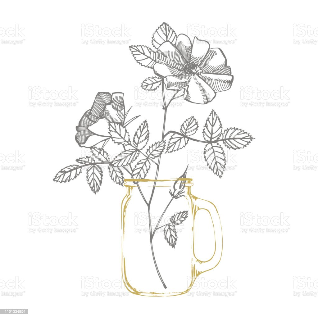 Wild Rose Flowers Drawing And Sketch Illustrations
