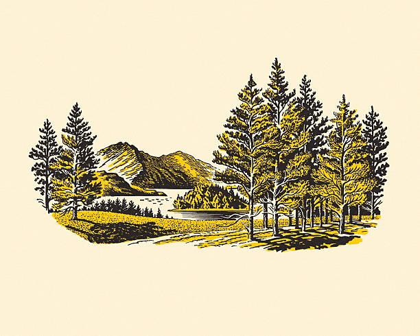 bildbanksillustrationer, clip art samt tecknat material och ikoner med wilderness lake - vildmark