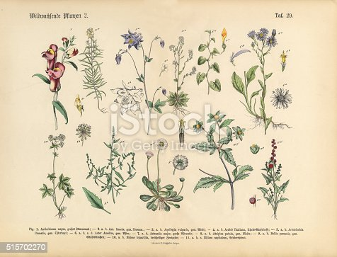 Very Rare, Beautifully Illustrated Antique Engraved Victorian Botanical Illustration of Wildflowers, Medicinal and Herbal Plants: Plate 29, from The Book of Practical Botany in Word and Image (Lehrbuch der praktischen Pflanzenkunde in Wort und Bild), Published in 1886. Copyright has expired on this artwork. Digitally restored.