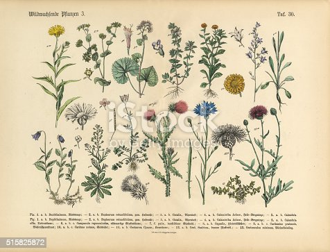 Very Rare, Beautifully Illustrated Antique Engraved Victorian Botanical Illustration of Wildflowers, Medicinal and Herbal Plants: Plate 30, from The Book of Practical Botany in Word and Image (Lehrbuch der praktischen Pflanzenkunde in Wort und Bild), Published in 1886. Copyright has expired on this artwork. Digitally restored.