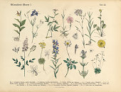 Very Rare, Beautifully Illustrated Antique Engraved Victorian Botanical Illustration of Wildflowers, Medicinal and Herbal Plants: Plate 32, from The Book of Practical Botany in Word and Image (Lehrbuch der praktischen Pflanzenkunde in Wort und Bild), Published in 1886. Copyright has expired on this artwork. Digitally restored.