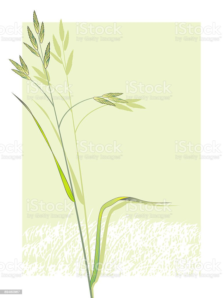 wildflower royalty-free wildflower stock vector art & more images of beauty in nature