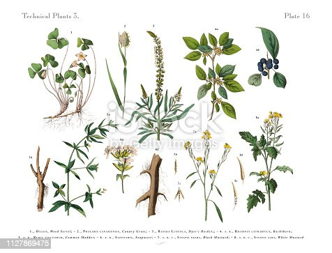 Very Rare, Beautifully Illustrated Antique Engraved Victorian Botanical Illustration of Annual and Perennial Plants: Plate 16, Published in 1886. Source: Original edition from my own archives. Copyright has expired on this artwork. Digitally restored.