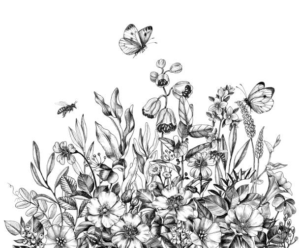 Wildflowers, flying bees and butterflies Hand drawn wildflowers, flying bees and butterflies isolated on white background. Pencil drawing  elegance flowers border in vintage style. bee borders stock illustrations
