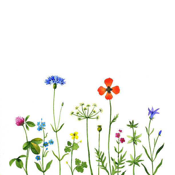 wildflowers - wildflowers stock illustrations, clip art, cartoons, & icons