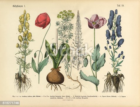 Very Rare, Beautifully Illustrated Antique Engraved Victorian Botanical Illustration of Wildflowers, Poisonous and Toxic Plants: Plate 19, from The Book of Practical Botany in Word and Image (Lehrbuch der praktischen Pflanzenkunde in Wort und Bild), Published in 1886. Copyright has expired on this artwork. Digitally restored.