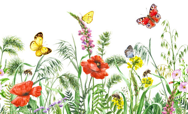 illustrazioni stock, clip art, cartoni animati e icone di tendenza di wildflowers  seamless horizontal border - impollinazione
