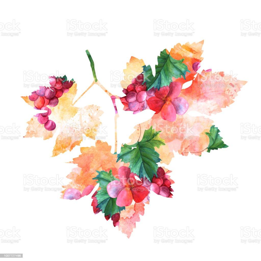 Vin vigne aquarelle dessin sous la forme dune feuille isol e sur blanc avec un trac de - Feuille de vigne dessin ...