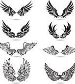 Wings Illustration