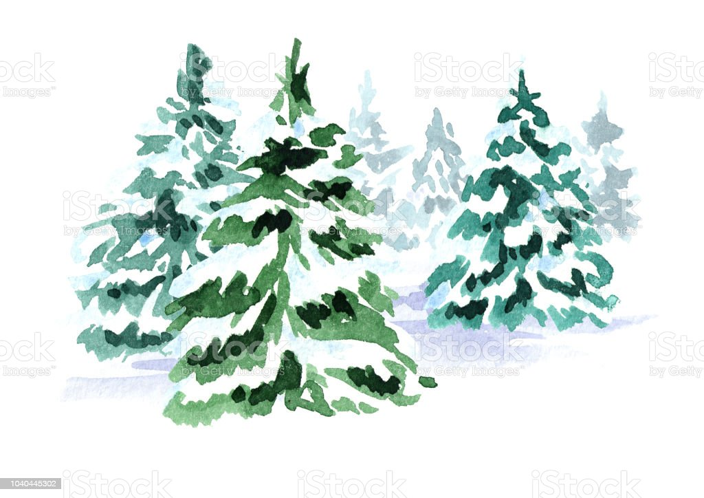 Winter Forest Christmas Fir Tree Watercolor Hand Drawn Illustration