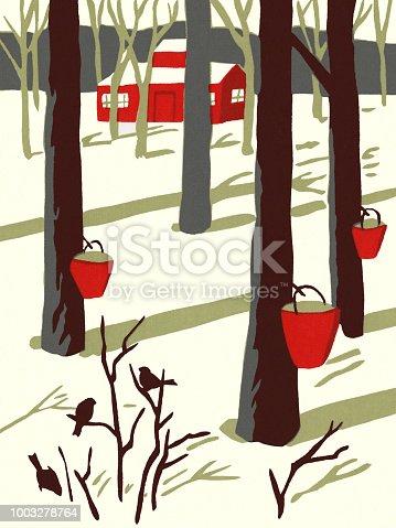 istock Winter Scene of Maple Trees Tapped for Sap 1003278764
