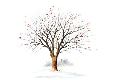 Winter Tree Without Leaves